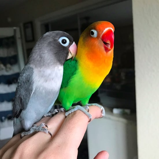 Kiwi and Goth Are Lovebirds
