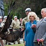 Charles and Camilla got up close and personal with a bald eagle called Zephyr at the Sandringham Flower Show in July 2015.