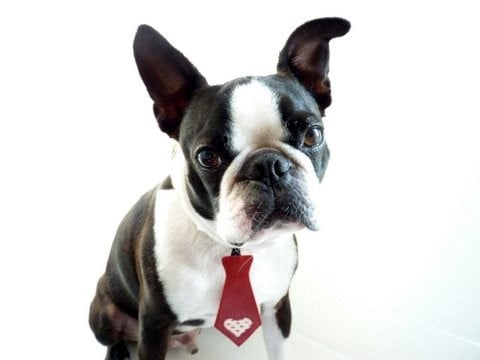 For hipster dogs who like to hit the dog park in style, this leather and vintage fabric tie also goes well with skinny jeans and vests.