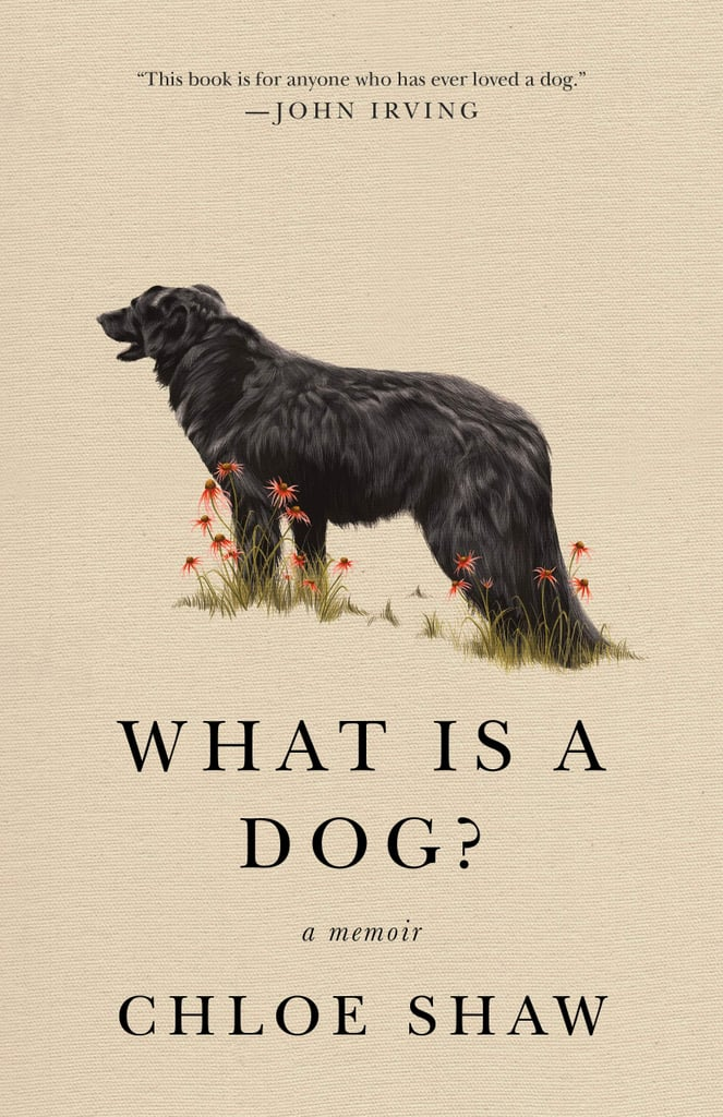What Is a Dog? by Chloe Shaw