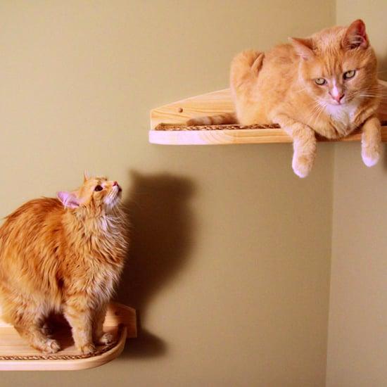 Stylish Pet Furniture
