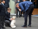 Prince Harry's Latest Outing Included Cute Interactions With Dogs and Kids, and I Can't Deal