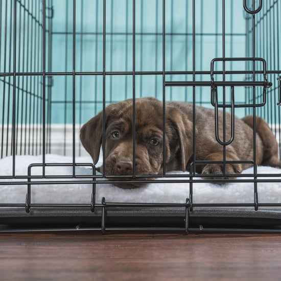 How to Crate Train a Puppy at Night