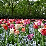 Best Places to See Spring Flowers