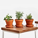 Aromatic Herbs Collection