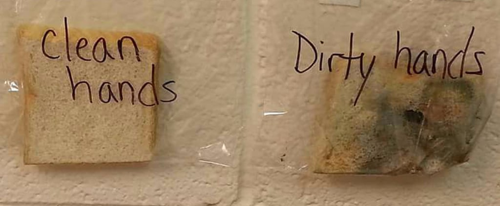 Teacher's Sandwich Experiment on Germs