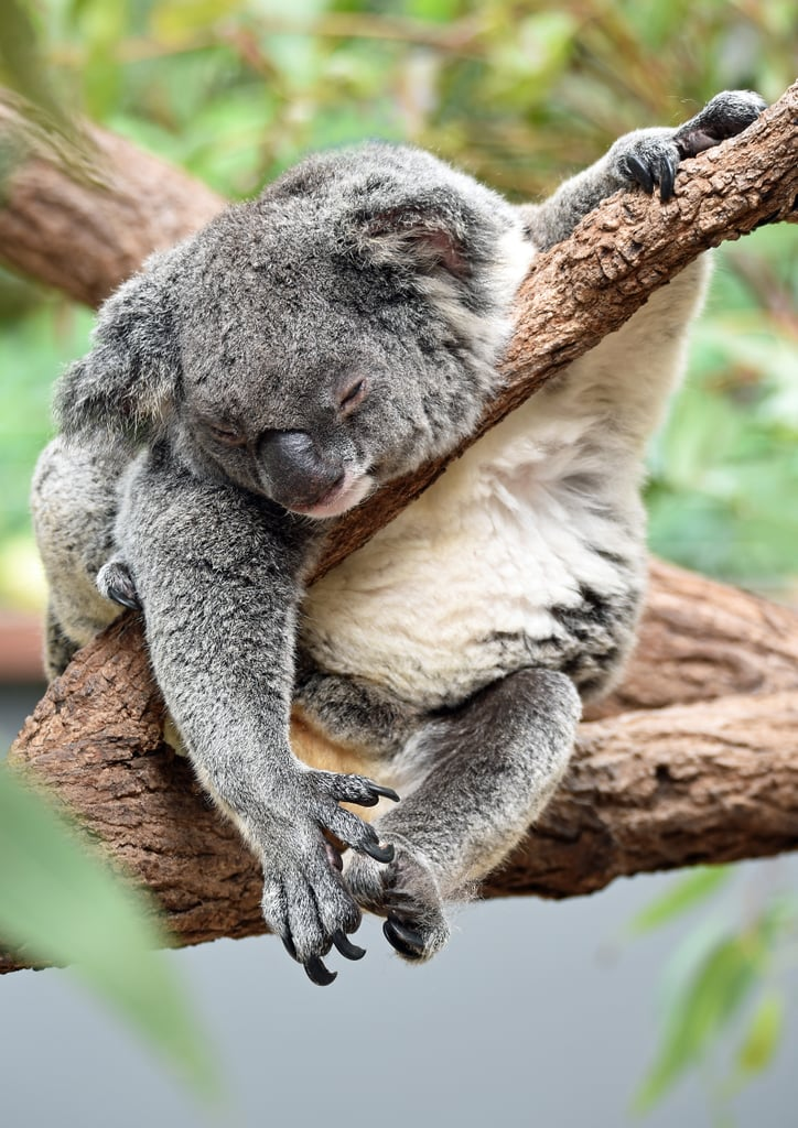 Just 25 Pictures of Animals Napping, Because You Deserve It