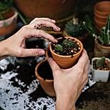 Plant a garden.