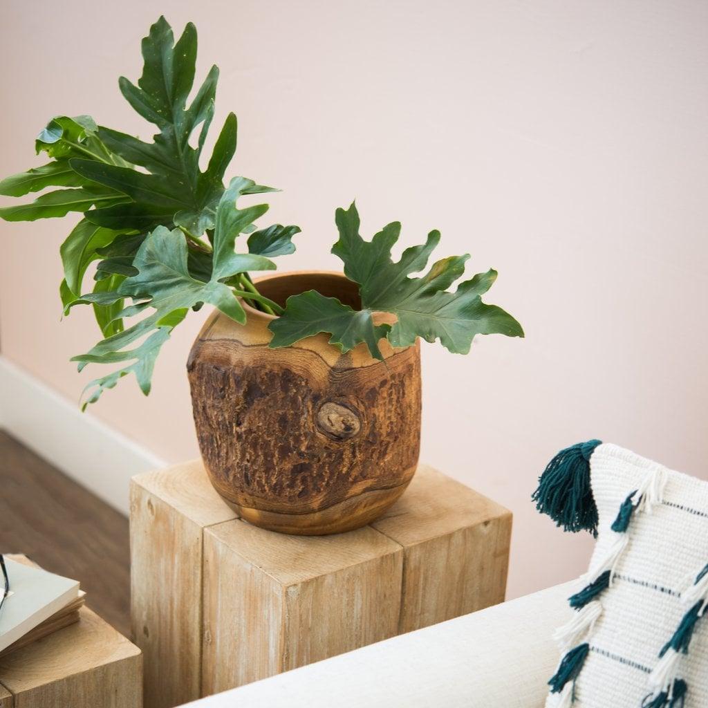 Colette Live Edge Vase