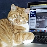 """""""Oh, you need to use your laptop? Now's not a good time."""" Source: Flickr user mseckington"""