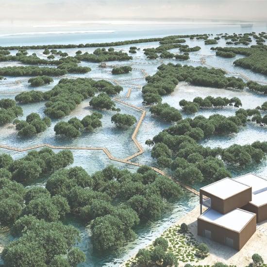 ممشى القرم في أبوظبي يفتح أبوابه لاستقبال الزوار رسمياً 2020