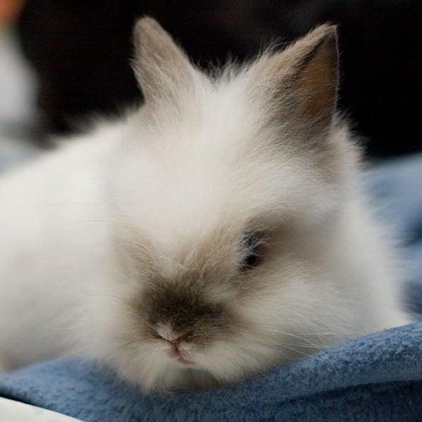 Bundled Bunny