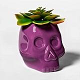 Skull Halloween Succulent