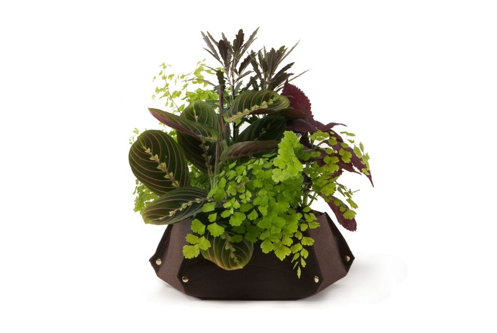 If she's got a green thumb, gift her with the Woolly Pockets' Tina Table Planter ($20) — it's super cute, eco-friendly, and makes a great centerpiece.