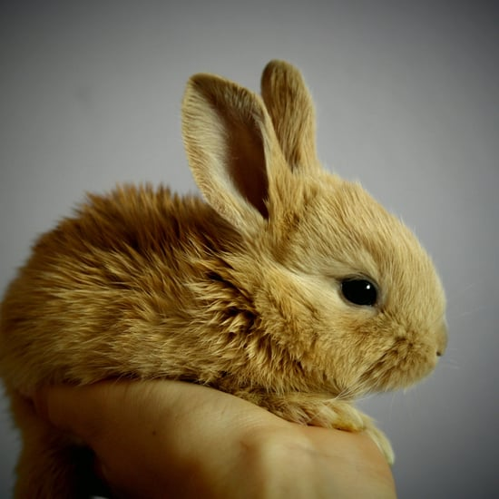 California Bans Beauty Products Tested on Animals
