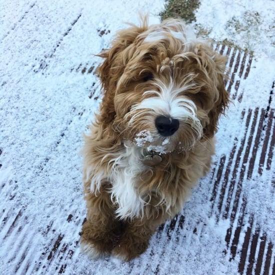 Pets in UK Snow Photos