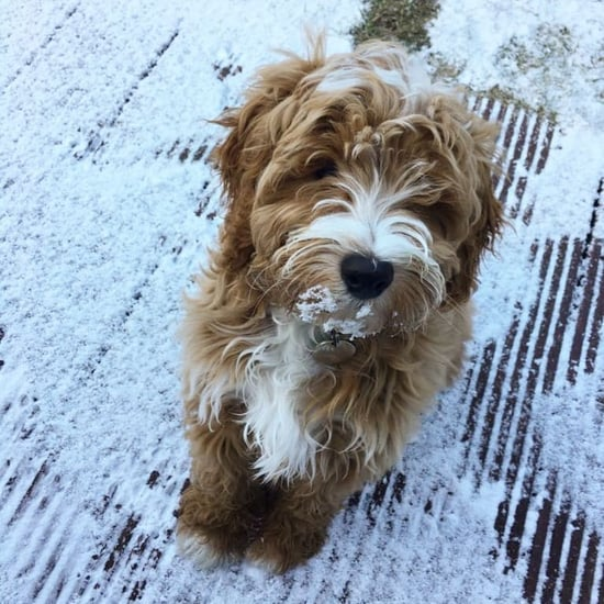 Photos of Pets in the Snow