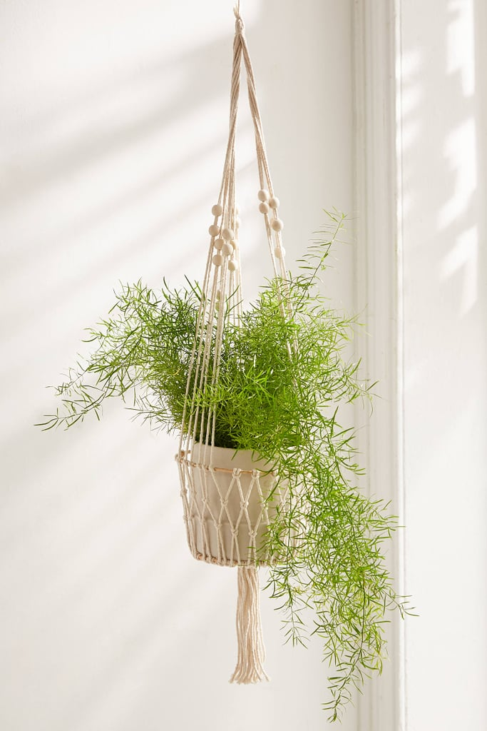 Best Gifts For Plant Lovers 2019 Popsugar Home