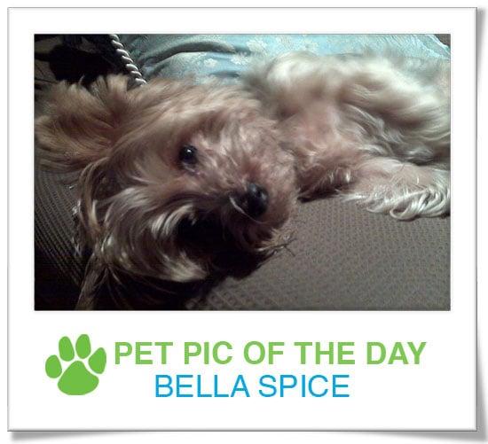 Pet pics on PetSugar 2009-03-06 09:30:55