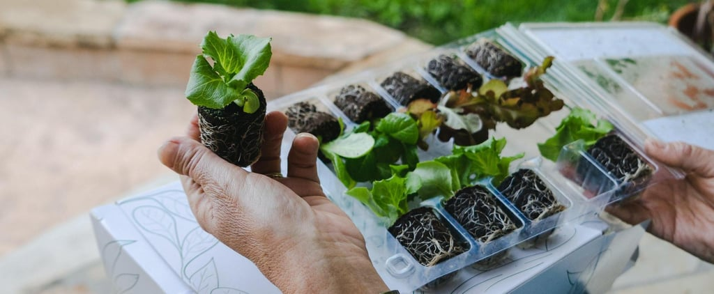 Where to Order Vegetable Plants Online For Delivery