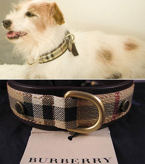 Found! Elizabeth Taylor's Sweet SATC Collar on the Cheap