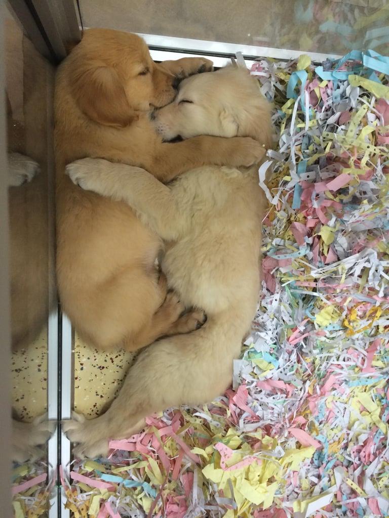 These sleepyheads