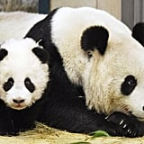"This panda mama and her cub shared a quiet moment, but her pose tells us ""Look, but don't touch!"""