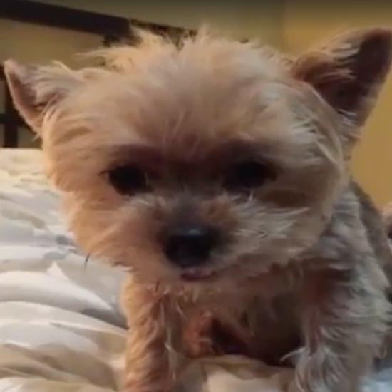 فيديو لجرو حزين بسبب هطول المطر