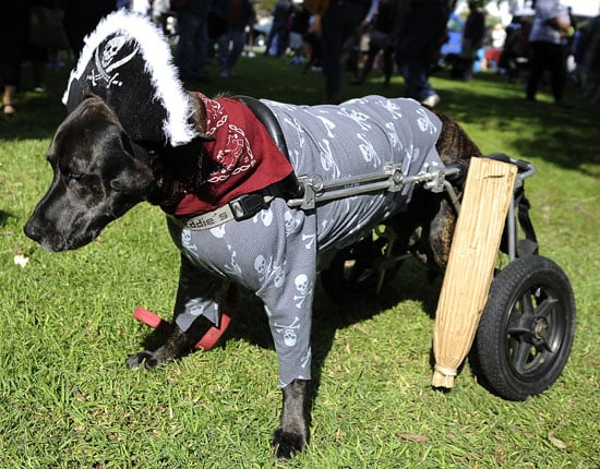 Pictures of Halloween Dog Costume Parade in Long Beach, California