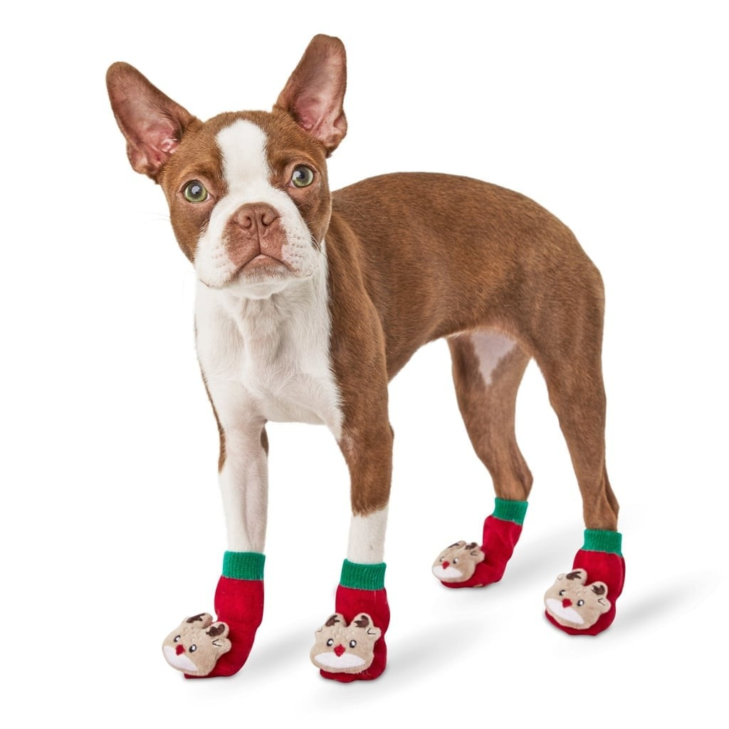 Christmas Dog Socks at Petco