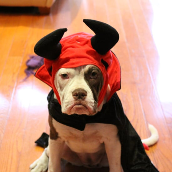 Pet Halloween Costume Tips