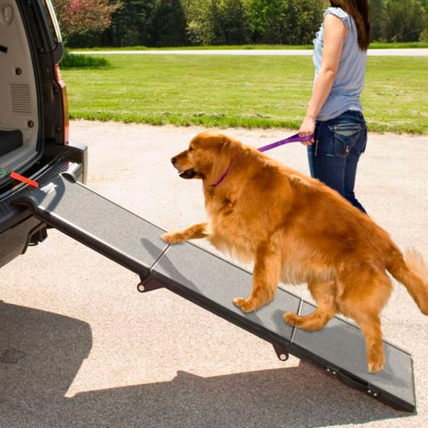 What To Bring On A Road Trip With Pets Popsugar Pets
