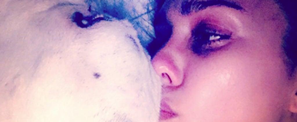 Jessica Alba's Dog Bowie Dies