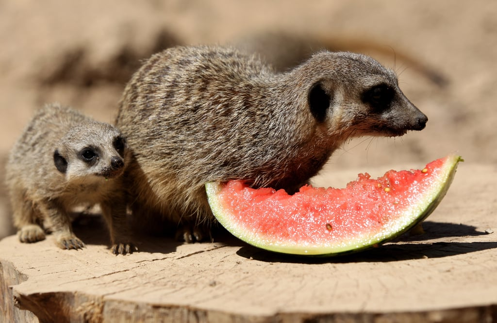 A Coati by Any Other Name