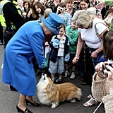 Why Did Queen Elizabeth Have So Many Corgis?