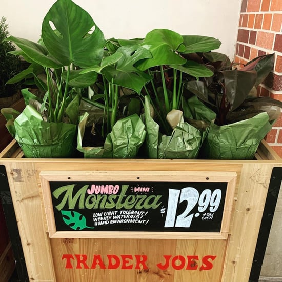 Trader Joe's Plants That Are Affordable and on Trend