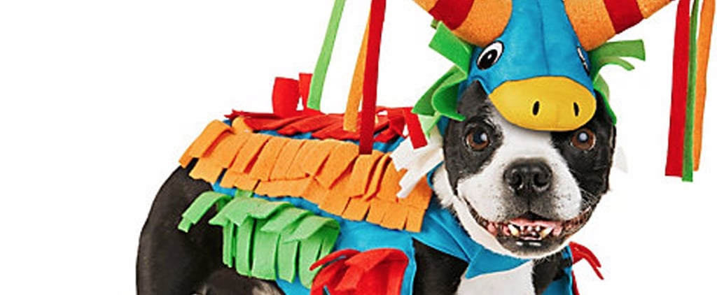 The Best Dog Halloween Costumes Petco Has on Offer This Year