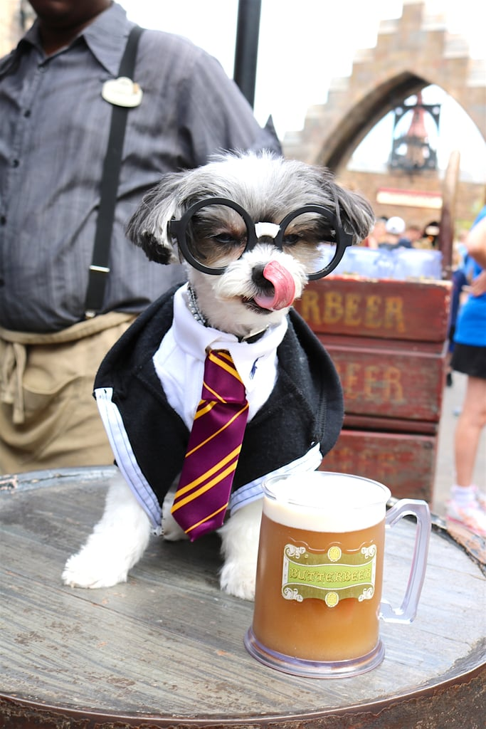Once in Hogsmeade, I enjoyed a delicious Butterbeer!