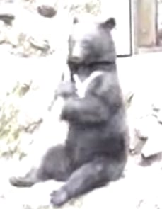 Sideshow Bear