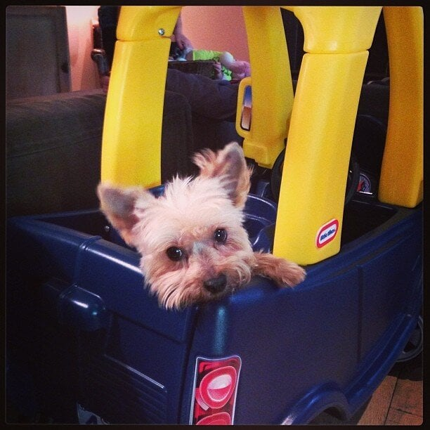 Lil Luca Comrie's Little Tikes coupe was carjacked by a cute companion. Source: Twitter user HilaryDuff