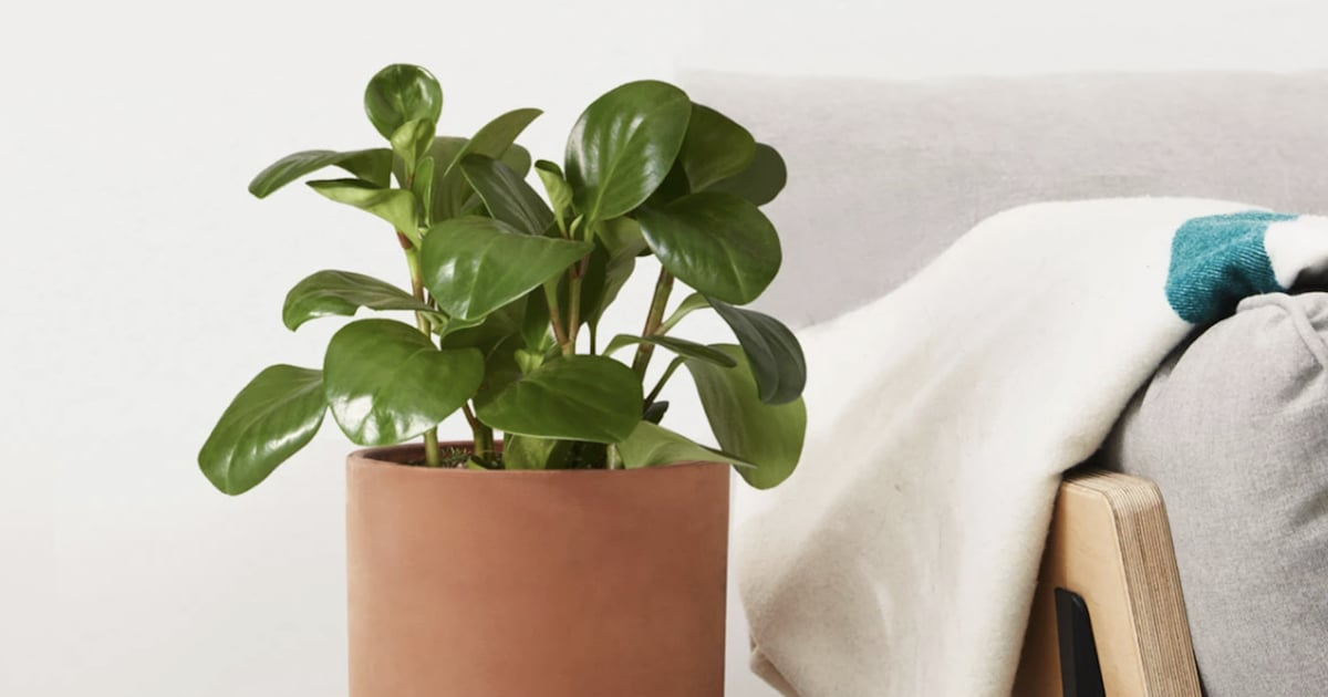 These 16 Plants are Unbe-leaf-ably Pretty and Perfect For Your Bedroom