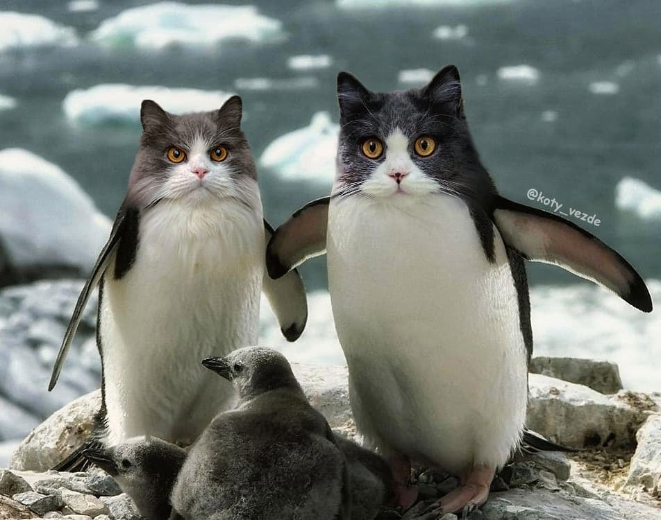 Penguins With Cats' Faces