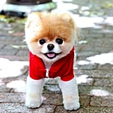 Boo's looked ready for a brisk jog!