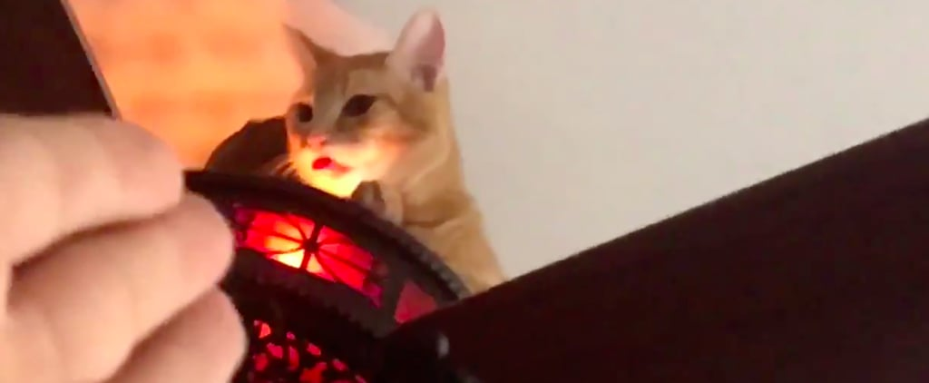 Video Of Owner Finding Cat Sitting On Ceiling Fan Popsugar