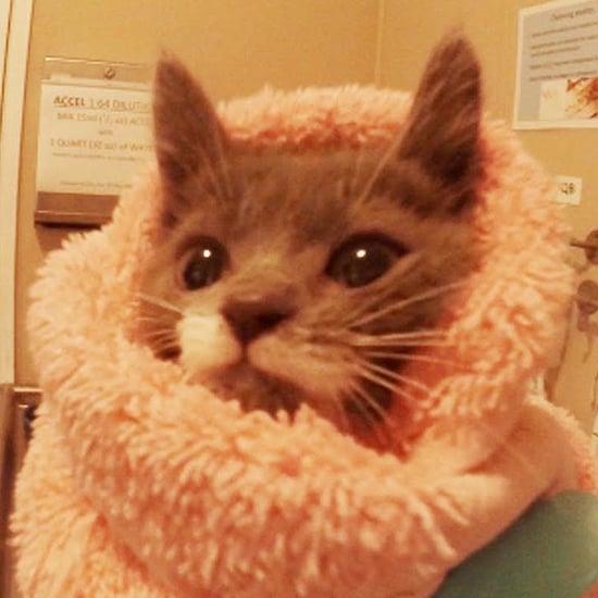 فيديو عن حضانة قطط تابعة لجمعية الرفق بالحيوان
