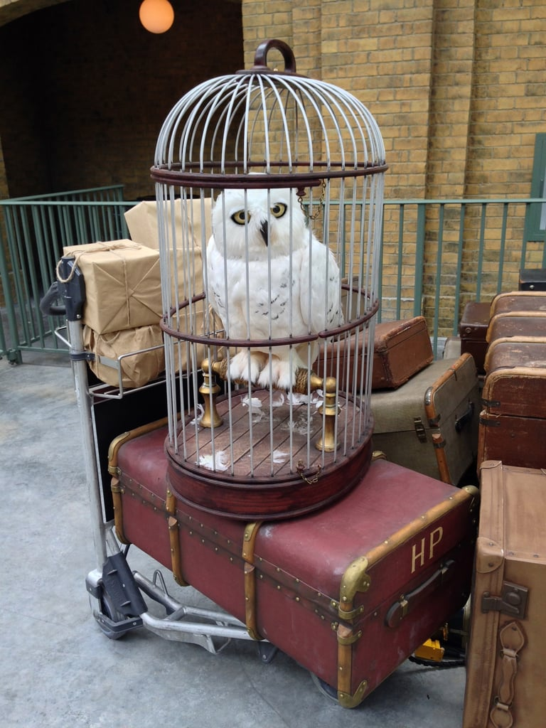 Harry's luggage and owl, Hedwig, wait patiently for him at Platform 9 3/4.