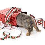Peeking at the Presents