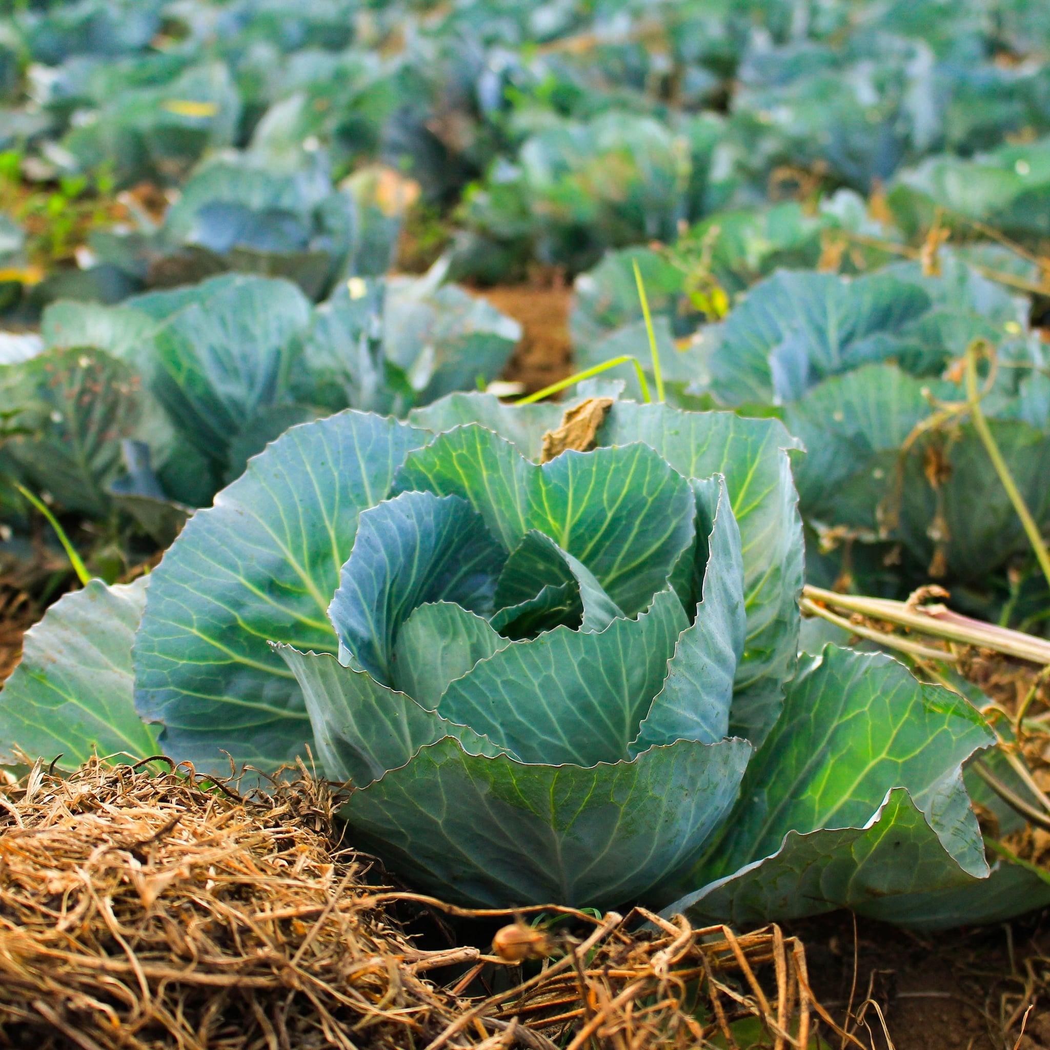 Fall Vegetable Gardening Tips Popsugar Food