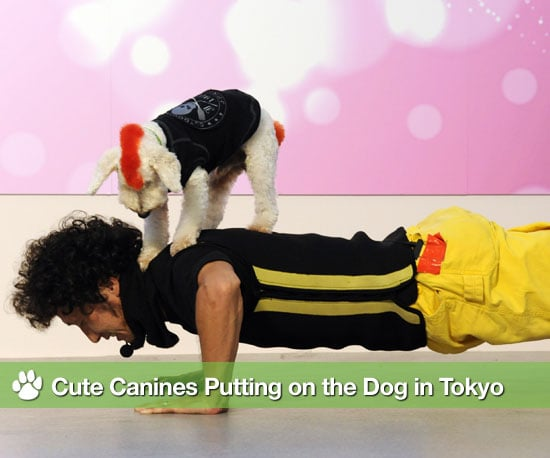Pictures of Dog Fashion Show in Tokyo
