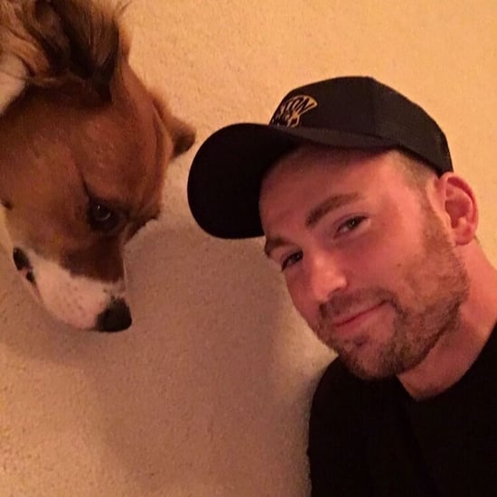 Chris Evans Has a Chest Tattoo of His Dog Dodger's Name